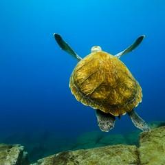 Immersioni subacquee